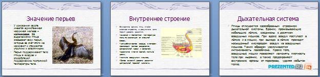 Слайды презентации: Класс Птицы
