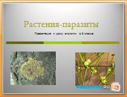 Растения паразиты