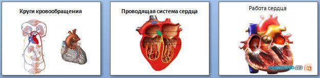 Слайды презентации: Сердечно-сосудистая система