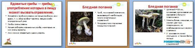 Слайды презентации: Ядовитые грибы