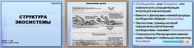 Слайды презентации: Структура экосистемы