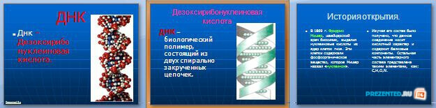 Слайды презентации: ДНК