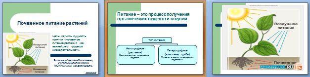 Слайды презентации: Почвенное питание растений