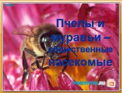 Пчелы и муравьи - общественные насекомые