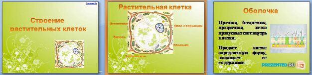Слайды презентации: Строение растительной клетки
