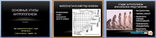 Слайды презентации: Основные этапы антропогенеза