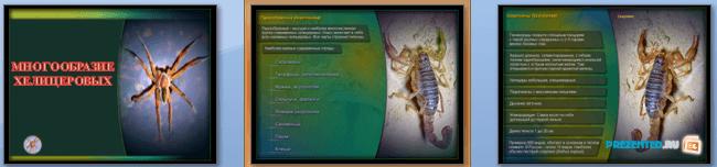 Слайды презентации: Многообразие хелицеровых