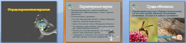 Слайды презентации: Отряд перепончатокрылые