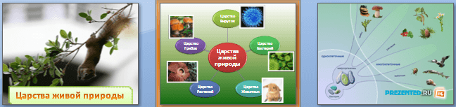 Слайды презентации: Царства живой природы