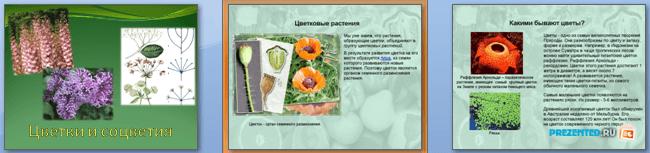 Слайды презентации: Цветки и соцветия