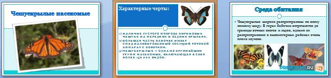 Слайды презентации: Чешуекрылые насекомые
