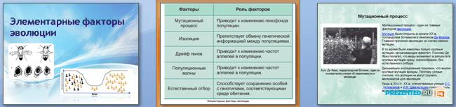 Слайды презентации: Элементарные факторы эволюции