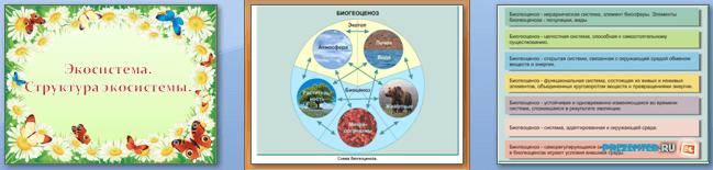 Слайды презентации: Экосистема. Структура экосистемы