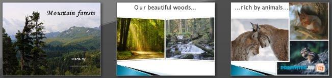 Слайды презентации: Спасение лесов (Saving forests)