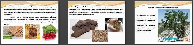 Слайды презентации: Инкрустирующие вещества клеточной оболочки растений