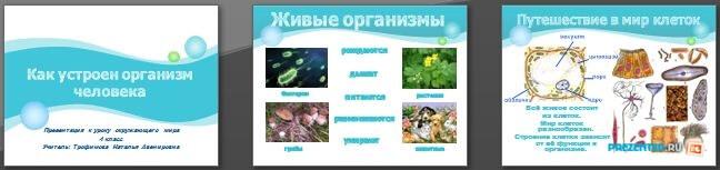 Слайды презентации: Как устроен организм человека