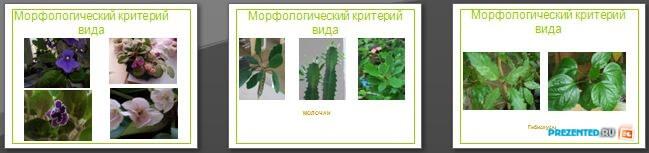 Слайды презентации: Морфологический критерий вида