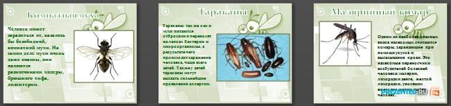 Слайды презентации: Насекомые - переносчики возбудителей болезней и паразиты