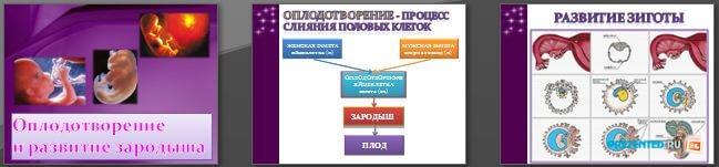 Слайды презентации: Оплодотворение и развитие зародыша