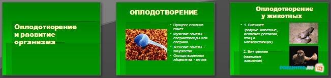Слайды презентации: Оплодотворение и развитие организма