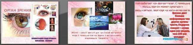 Слайды презентации: Орган зрения