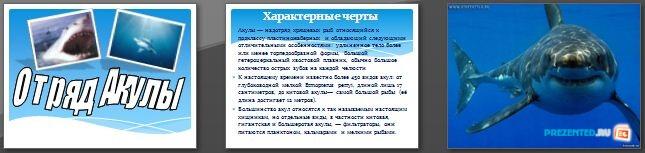 Слайды презентации: Отряд Акулы