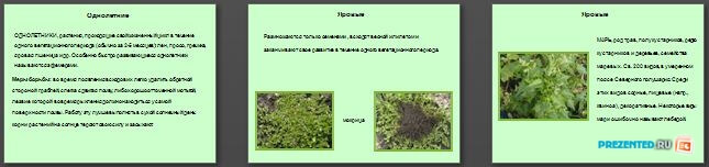 Слайды презентации: Полевые сорняки