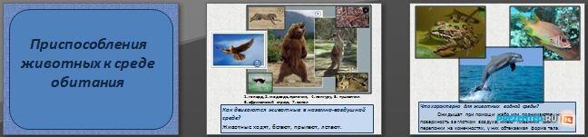 Слайды презентации: Приспособления животных к среде обитания
