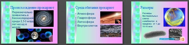 Слайды презентации: Прокариотическая клетка