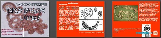 Слайды презентации: Разнообразие паразитических червей
