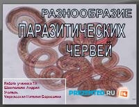 Разнообразие паразитических червей
