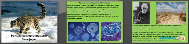Слайды презентации: Роль живых организмов в биосфере