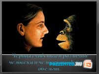 Сходство человека и человекоподобных обезьян