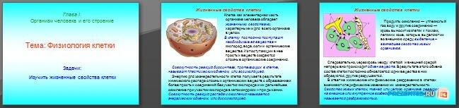Слайды презентации: Физиология клетки