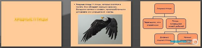 Слайды презентации: Хищные птицы
