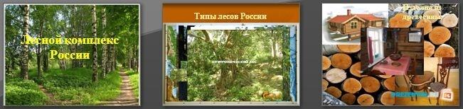 Слайды презентации: Лесной комплекс России