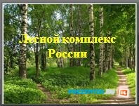 Лесной комплекс России
