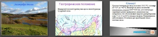 Слайды презентации: Лесотундра России