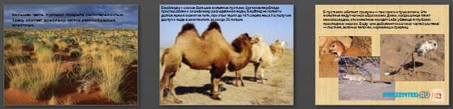 Слайды презентации: Пустыня и ее обитатели