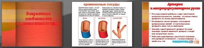 Слайды презентации: Возрастные особенности кровеносных сосудов