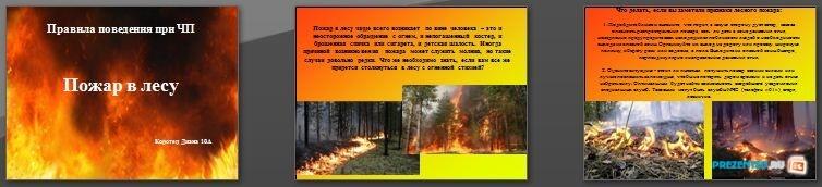 Слайды презентации: Правила поведения при ЧП. Пожар в лесу