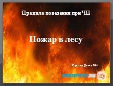 Правила поведения при ЧП. Пожар в лесу