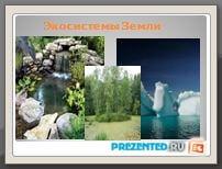 Биогеоценоз и экосистема