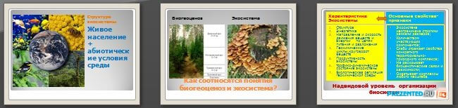 Слайды презентации: Биогеоценоз и экосистема