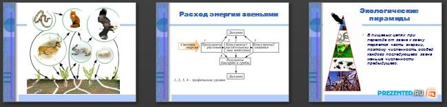 Слайды презентации: Пищевые связи в биогеоценозах