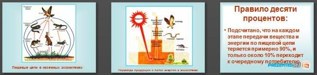 Слайды презентации: Пищевые цепи и поток энергии в них