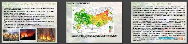 Слайды презентации: Саморазвитие экосистем