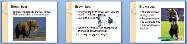Слайды презентации: Бурый медведь (Brown Bear)