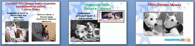 Слайды презентации: Животные космонавты