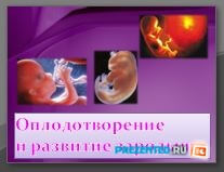 Оплодотворение и развитие зародыша